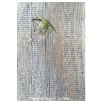 "Greeting Card ""Flattened Bugs"" by Toshimistsu"